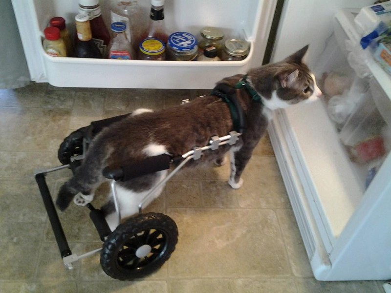 With his new wheels, Chance was able to discover refrigerators!