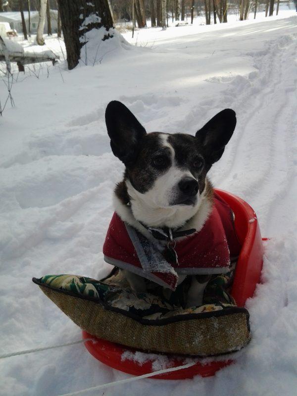 vinny-enjoying-the-sled-ride