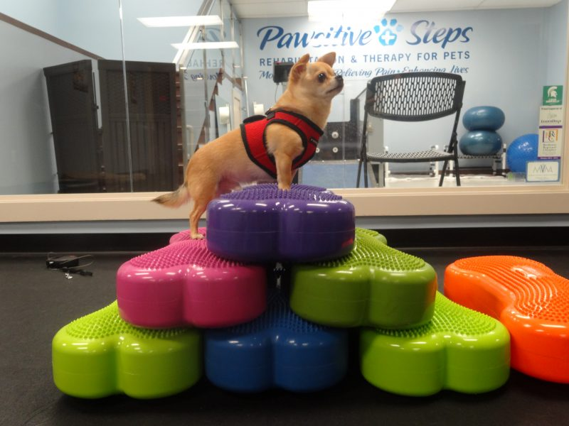 My Favorite Addition to My Canine Gym