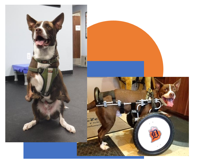 Home | Pawsitive Steps Rehabilitation & Therapy for Pets